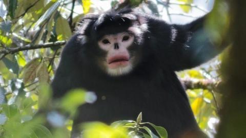 Biodiversité Birmanie